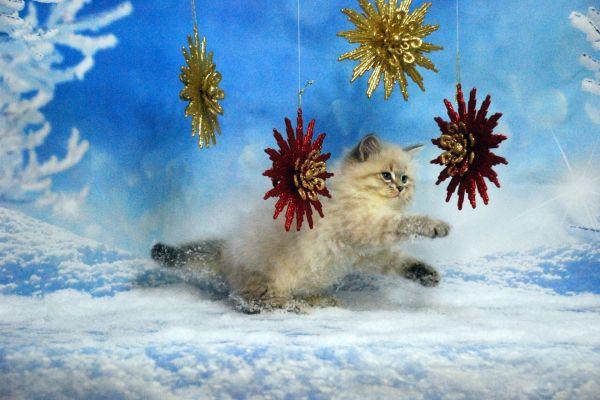 fistashka-winter-symphony-1382869809-BE33-796D-7809-A2C55F3CAA4A.jpg