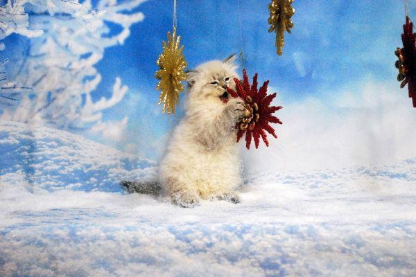 fistashka-winter-symphony-171BA92831-FF39-CE90-FBBB-360780575CA7.jpg