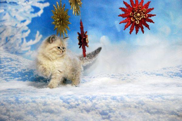 fistashka-winter-symphony-1873D3F81A-3A78-7A49-4ECC-36A4EEBC92C3.jpg