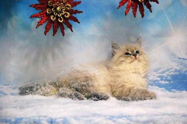 fistashka-winter-symphony-23B0FBAB91-98FF-D8B0-9699-F04074947781.jpg