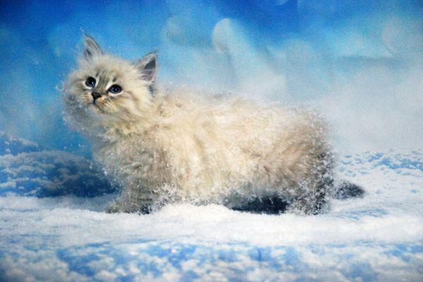 fistashka-winter-symphony-276DB02D2D-DA70-0938-B843-03538ABFDAEE.jpg