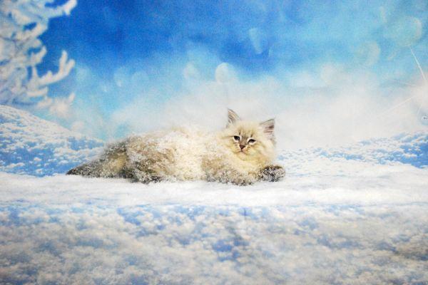 fistashka-winter-symphony-280E30E6DD-D984-1ADF-58D0-5C2B286C79C7.jpg