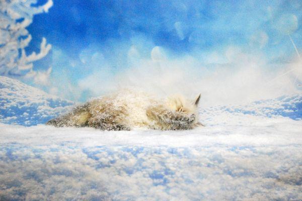 fistashka-winter-symphony-327992D931-FDCF-C296-758F-352F390151D8.jpg