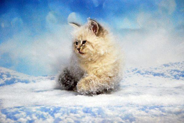 fistashka-winter-symphony-3681D785FE-F105-4BCB-3FB8-9340923B2CEC.jpg